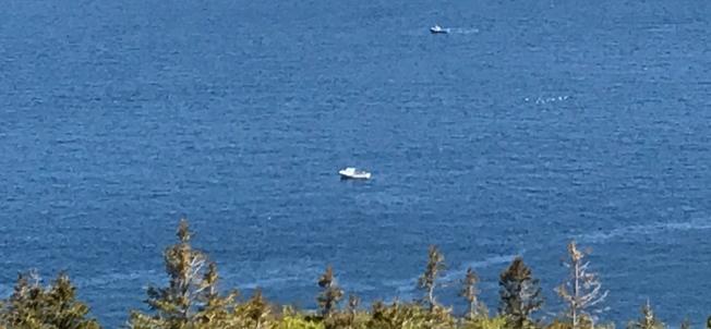 Boote auf Walsuche